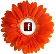 fb_orange_daisy_btn