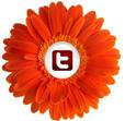 tw_orange_daisy_btn